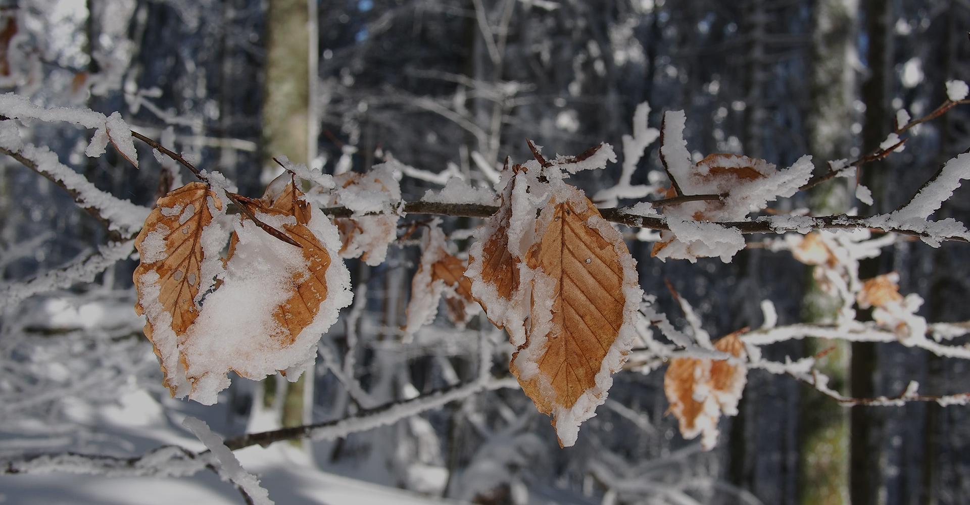 slide1-Foreste_e_cambiamenti_climatici